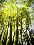 bamboo-bright-colors-216612
